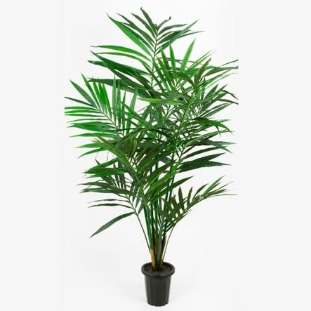 mr_plant_palme